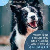 Hoje é o Dia Mundial dos Animais. Eles são essenciais para nossa sobrevivência, por isso, não deixe de amá-los e respeitá-los! #diadosanimais #amo #ahazou #animais #respeito