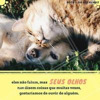 Hoje é o Dia Mundial dos Animais, por isso, viemos lembrar que todos os animais merecem o nosso respeito, e precisam do nosso cuidado. Não deixe de dar os parabéns para o seu animalzinho com muito amor, beijos e carinho, ele merece! #amo #ahazou #diadosanimais #felicidade #animais #respeito