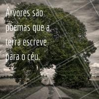 Feliz dia da árvore! #diadaarvore #ahazou #flores #alegria #vida