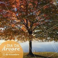 Plantar uma árvore é cuidar do amanhã! #diadaarvore #ahazou #flores #alegria #vida