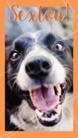 Uhuuuu sextou! Bora comemorar! #cachorro #ahazou #animais #pets #sextafeira