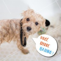 Seu pet morre de medo da hora do banho? 😱 Traga ele para um banho, profissionais qualificados e experientes que vão tornar o momento do banho do seu pet muito mais tranquilo. #pets #ahazou #animais #cachorro #gato #petshop #veterinario