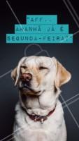 Alguém sabe dizer como a Segunda faz pra chegar tão rápido? 😂 #segundafeira #ahazou #cachorro #motivacional