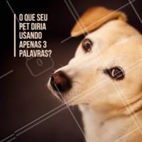 Vamos brincar? 😂 Comenta aqui o que você acha que seu pet iria dizer! #pet #animal #ahazou #cachorro #ahazoupet