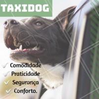 Sem tempo para trazer seu pet? Tudo bem! Conheça nosso serviço de taxidog pro seu pet e aproveite os benefícios. Buscamos e levamos seu pet em casa! #petshop #veterinario #ahazou #animais #cachorro #gato