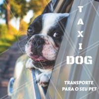 Aproveite nosso serviço de taxidog com todo conforto e segurança para  tosar, tomar aquele banho ou serviços da clínica veterinária! #taxidog #ahazou #petshop #veterinario #cachorro #gato