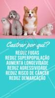 Castrar é um ato de amor e proteção! Vai muito além da prevenção de ninhadas indesejadas: previne doenças, melhora a saúde física e mental e aumenta a expectativa de vida do seu pet. 🐶😻 #castraçao #ahazou #pet #animal #animais #ahazoupet
