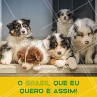 Quem aí também acredita que só os filhotes fofos podem salvar o Brasil? 🐶😂 #cachorro #filhote #puppy #ahazoupet #animais #petshop