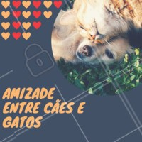 É possível sim! Os cães e gatos podem se dar muito bem, se forem apresentados com calma e cuidado. Se as duas espécies forem filhotes, o processo fica muito mais fácil! O que pode acontecer quando um já é adulto, é o ciumes do animalzinho mais velho. Cuide para tratar ambos igualmente e garantir que os dois tenham seu próprio espaço garantido, com suas próprias rações e água. Dê um tempo para que os dois se conheçam e tenha paciência! 😉 #cachorro #gato #ahazoupet #petshop #veterinario