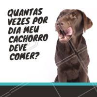 Cada cachorro tem uma rotina de alimentação adequada para seu porte, raça e saúde. Mas, no geral, a alimentação deve ser feita no mínimo 2 vezes ao dia! Converse com seu veterinário para saber qual a alimentação correta pro seu pet. 🐶 #cachorro #ahazoupet #petshop #veterinario