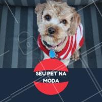 Ama vestir seu pet e deixá-lo na moda? 😎 Venha conferir as roupinhas disponíveis que temos aqui! #pet #cachorro #ahazou #ahazoupet #modacanina #petshop