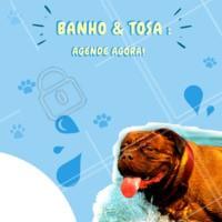 Aproveite para marcar o banho do seu pet! #pet #ahazou #animais #cachorro #gato #petahazou