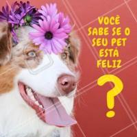 Cachorro feliz é cachorro saudável. E ele dá alguns sinais, que são esses:  Ele fica alegre quando você chega em casa.  Não tem sinal de lambedura nas patas.  Ele te segue pela casa.  Ele brinca.  Ele se alimenta todo dia.  Com esses sinais você tem a certeza que o seu melhor amigo é feliz. 🐶  #pet #ahazou #animais #cachorro #gato #petahazou