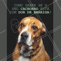 Os cachorros são bem sensíveis, mas as vezes é difícil para o dono identificar se tem algo errado. Por isso, fique de olho em qualquer comportamento estranho. Se ele estiver muito quieto e apático, ative o sinal de alerta. Também observe se ele está comendo normalmente e se não teve vômitos. Em caso de algo estranho procure um profissional de confiança. #pet #ahazou #clinica #veterinario #cachorro #petahazou