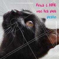 Você sabia que os gatinhos pretos demoram 13% a mais de tempo para serem adotados em relação aos outros? Além de serem mais mau tratados e sofrerem preconceito. 😢 Mas só quem tem um gatinho preto sabe que eles oferecem tanto amor como os outros! Chega de preconceito. Denuncie maus-tratos. #gato #ahazoupet #pet #animais #gatopreto