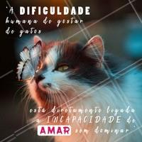 Concordam? 🐱 Quem aí ama gatos? Comenta aqui! #gatos #ahazou #gato #animais