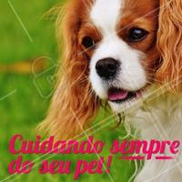 Essa é nossa proposta: cuidar sempre bem do seu bichinho, assim como você cuida! 🐶🐱 Que tal nos fazer uma visita? #pet #animal #ahazou #petshop #ahazoupet #cachorro