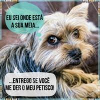 Ah sua pestínea! #cachorro #ahazou #pet #engracado #petahazou