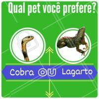 E ai , qual seu preferido? #petahz  #animal #pet #ahazou #cobra #lagarto