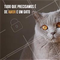 O combo perfeito pra ser feliz 😘 #gato #ahazoupet #pet #animal #petshop #gatos