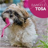 Traga seu bichinho para um banho e tosa! #ahazou #banhoetosa #veterinario #cachorro