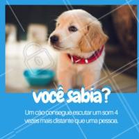 Sabe quando seu cachorro parece que sente que alguém está chegando em casa? Na verdade, ele já ouviu os passos dessa pessoa de longe! A audição dos cães é muito superior ao dos humanos! A frequência detectada pelo homem vai de 16 Hertz a 20.000; já a do cão, vai de 10 Hertz a 40.000. #cachorro #ahazou #cão #cães #pets #animais
