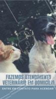 Atendemos animais de pequeno porte. Ligue para nós em caso de emergência. #veterinario #ahazou #atendimento #cachorro #gato