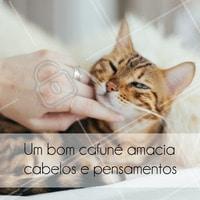 O dia começa muito mais bonito com um carinho, não acham? #ahazou #bomdia #cafune #gatinho