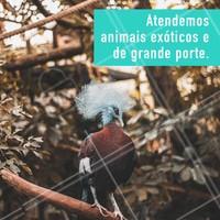 Somos especialistas em atender animais de grande porte e animais exóticos. Ligue pra gente e marque uma consulta. #animais #ahazoupet #vet #loveanimals