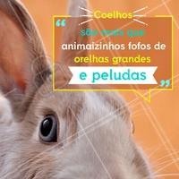 Os coelhinhos são ótimos pets para quem mora em um ambiente pequeno. Eles não precisam de muito espaço, e são mais independentes. Mas, como qualquer outro bichinho, eles precisam de atenção e cuidados. São muito carinhosos, e adoram uma companhia. Ronronam quando estão felizes, não é fofo demais? #meupet #coelho #ahazoupet #peludos