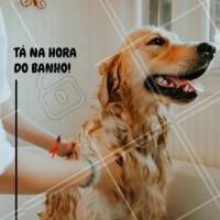 Agende já o banho do seu pet, ele merece ficar limpinho e cheiroso 😍 #cachorro #petshop #pet #ahazoupet #banhoetosa