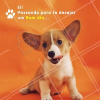 Bom dia, seguidores! 🐶 #bomdia #cachorro #ahazou #motivacional #inspiracional