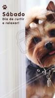 Finalmente chegou o fim de semana! Bora aproveitar 😍 #sabado #ahazou #cachorro #animais #pets
