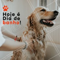 Traga seu pet para tomar um banho! O banho é super importante para eliminar a sujeira combatendo fungos, bactérias e doenças indesejadas. Além disso, seu pet fica hidratado e cheiroso pra você dar muito carinho. 🐶🐱 #animal #ahazou #pets #cachorro #gato #petshop #veterinario