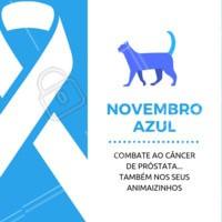 Não se esqueça que o seu melhor amigo também deve se prevenir contra o câncer de próstata! #pets #animais #ahazoupet #vet #novembroazul