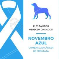 O seu pet também precisa fazer os exames de prevenção contra o câncer de próstata. Não se esqueça do seu amiguinho! #pets #animais #ahazoupet #vet #novembroazul