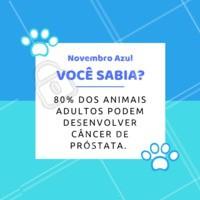 Por isso a castração do seu pet é a melhor prevenção! #pets #animais #ahazoupet #vet #novembroazul