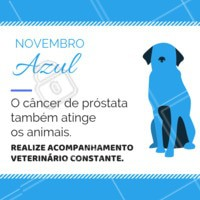 O acompanhamento veterinário é essencial para obter um diagnóstico precoce e realizar o melhor tratamento. #pets #animais #ahazoupet #vet #novembroazul