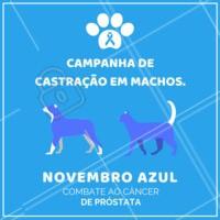 A melhor prevenção contra o câncer de próstata é realizar a castração do seu pet! Entre em contato conosco para saber mais. #pets #animais #ahazoupet #vet #novembroazul