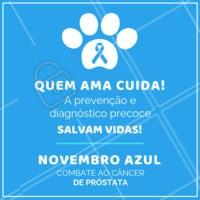 Manter um acompanhamento veterinário regularmente é fundamental para obter um diagnóstico precoce e realizar o melhor tratamento! #pets #animais #ahazoupet #vet #novembroazul
