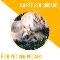 Seu pet anda se coçando sem parar? 🤔 Cuidado com as pulgas! Você sabia que apenas 5% das pulgas estão no cachorro, os outros 95% estão no ambiente na forma de ovos, larvas e pupas? É preciso cuidar da saúde do seu pet, pois as pulgas causam muito estresse e mal estar. #cachorro #gato #ahazoupet #pet #pulga #petshop #veterinario