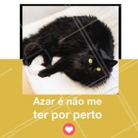 Você sabia que os gatinhos pretos demoram 13% a mais de tempo para serem adotados em relação aos outros? Além de serem mais mau tratados e sofrerem preconceito. 😢 Mas só quem tem um gatinho preto sabe que eles ofeecem tanto amor como os outros! Chega de preconceito. Denuncie maus-tratos. #gato #ahazoupet #pet #animais #gatopreto