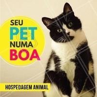 Seu pet merece ficar numa boa! 😎 #cachorro #ahazou #pets #pet #animais #hospedagemanimal #hospedagempet #hotelpet