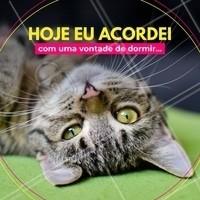 Hahah quem nunca? #gato #ahazou #engraçado #bomdia #pet #ahazoupet