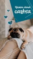 Você sabia que castrar é um ato de amor? A castração protege seu pet de doenças como câncer e problemas na próstata. A castração também reduz a frustração sexual nos machos e marcação de território. As fêmeas não ficarão mais vulneráveis a infecções de urina graves, pois o seu aparelho reprodutor é removido durante o procedimento. Se informe e castre seu bichinho <3 #castraçao #ahazoupet #pets #ahazou #petshop #veterinario
