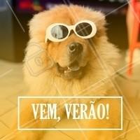 Quem aí tá ansioso pro Verão chegar logo? 🌊☀ #verao #ahazou #pet #animais #ahazoupet #petshop