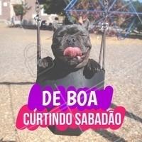 Todo mundo aí curtindo o sabadão? 😜 #sabado #ahazoupet #cachorro #pet #animais
