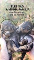 Eles também fazem parte da nossa família, e sem eles nada teria graça 😍 #pet #familia #ahazoupet #diadafamilia #amor