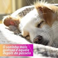 Tão gostosooooo! zzzZZzzZ 🐶😴 #dogwalker #dogs #passeio #passeador #ahazouapp #ahazoupet #pets #exercicio