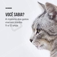 E aí, quantos anos seu gatinho tem? #gato #ahazou #petshop #pet #animal